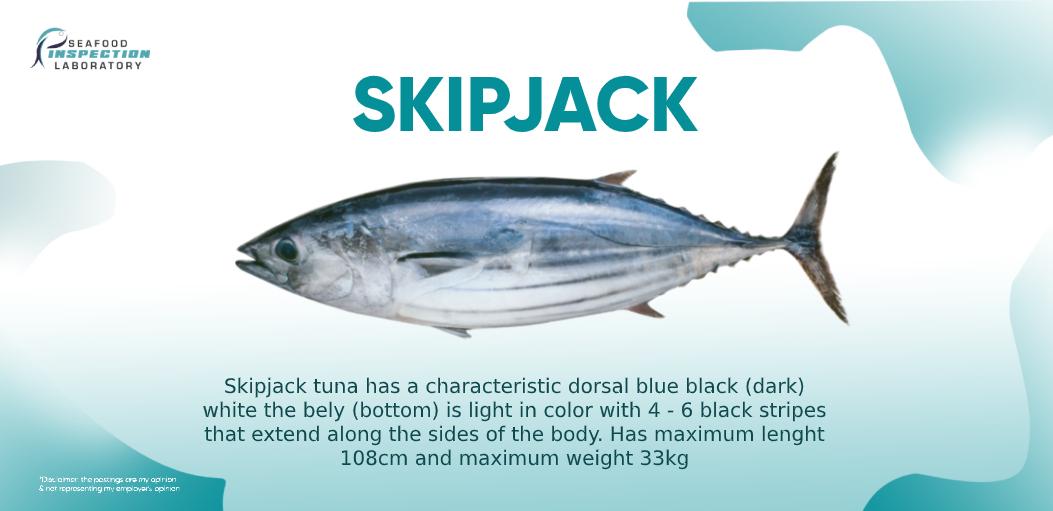 Skipjact Tuna