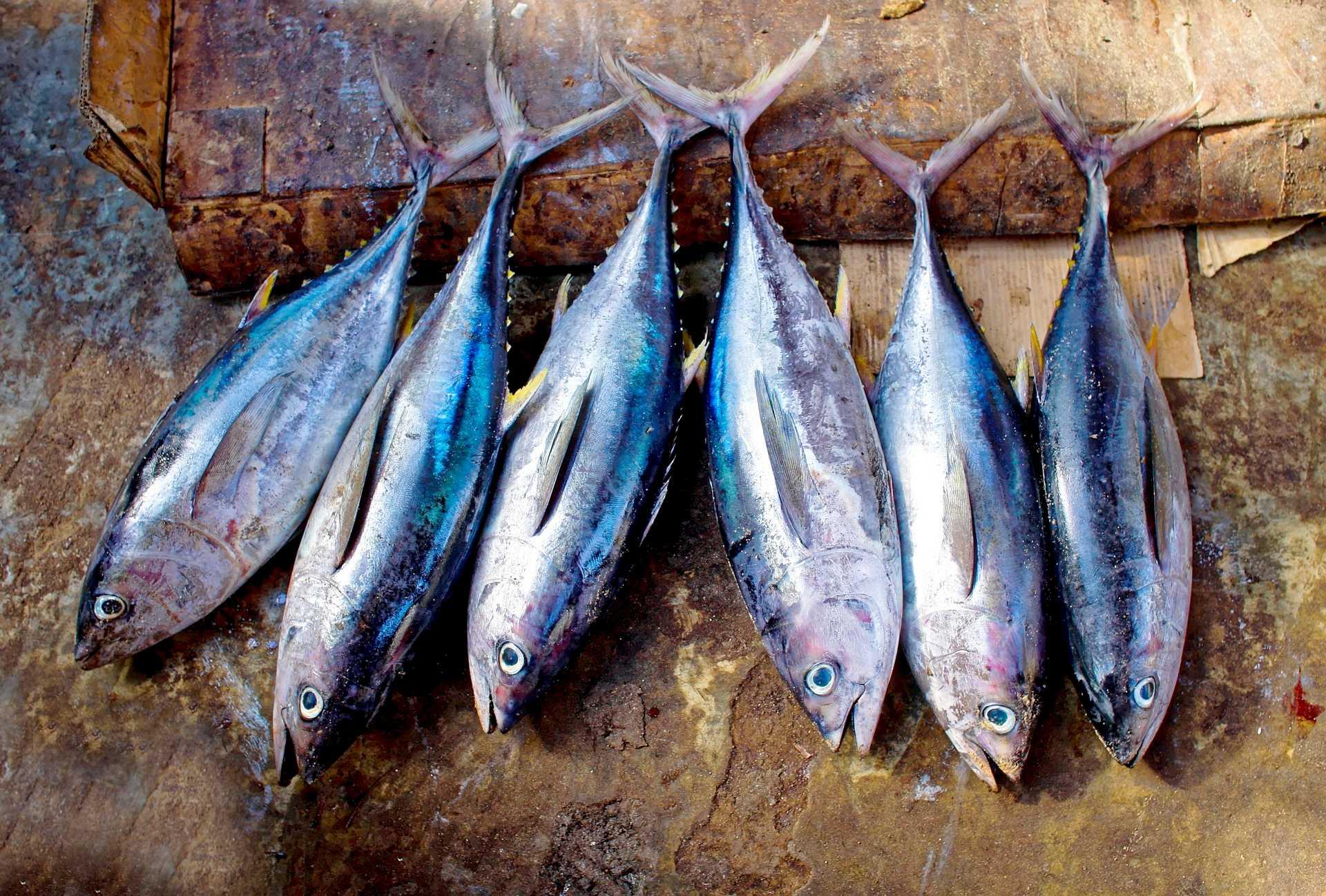Benefit of tuna fish